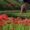 写真: 里山の秋景色