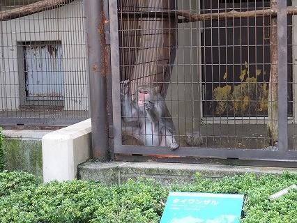とべ動物園 タイワンザル