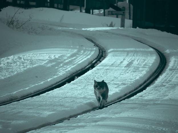 鉄路を行く