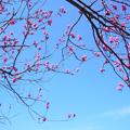 咲くときを待つ