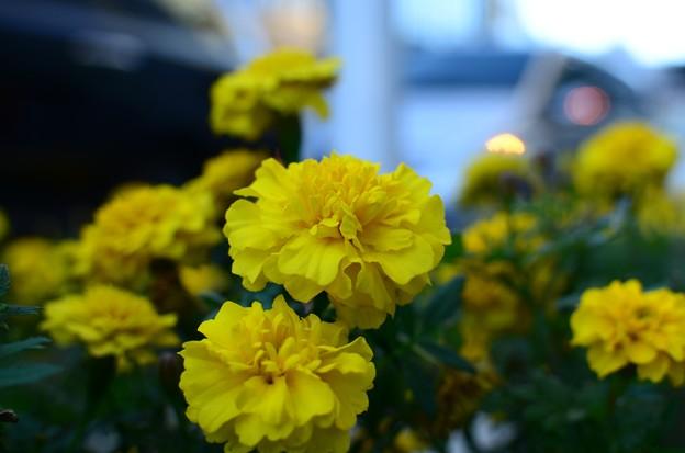 路傍の花 (2)