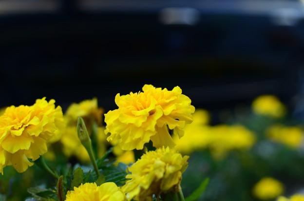 路傍の花 (3)