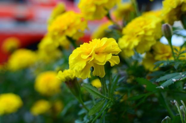 路傍の花 (5)