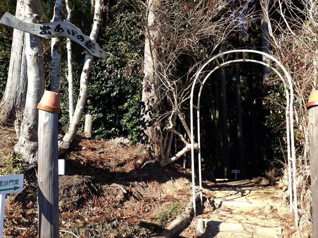 Photos: 出会いの道