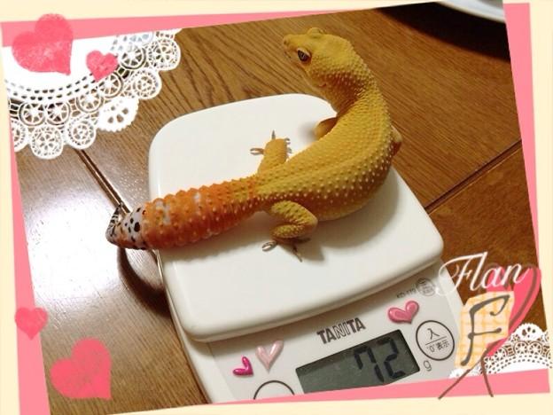 写真: 風蘭8ヶ月☆