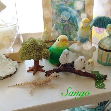 珊瑚と鳥コレクション