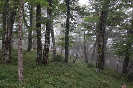霧の森 2