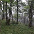 写真: 霧の森 2