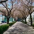Photos: 新石川スポーツ会館近くにあ...