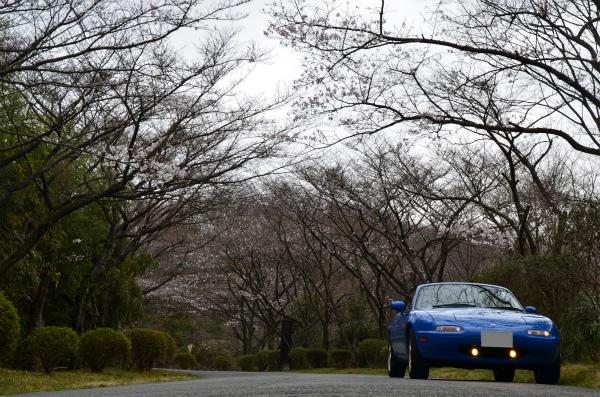 裏山はまだちょっとだけしか咲いていません。