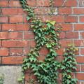 Photos: wall