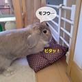 Photos: あ6