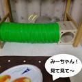 Photos: シロップ1