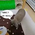 Photos: シロップ2