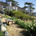 Photos: 横須賀_立石公園_秋谷海岸13