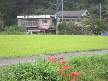24 9 鹿児島 永盛温泉 1