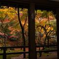 写真: 光明禅寺の秋♪