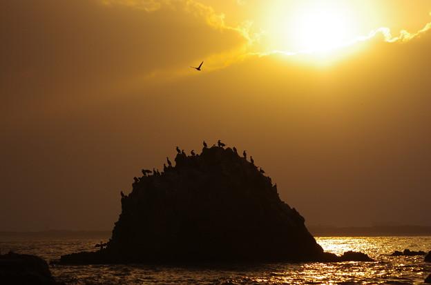 海鵜と朝陽♪