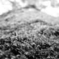 苔のゆく先