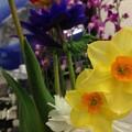 春を摘んで・・。