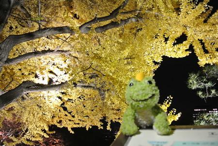 日比谷公園ライトアップ(2013-11-29-1)