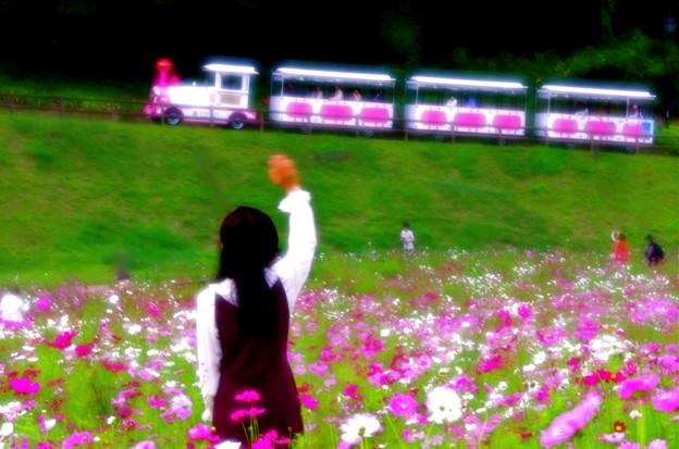 夢のコスモス鉄道