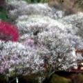 Photos: 春の架け橋