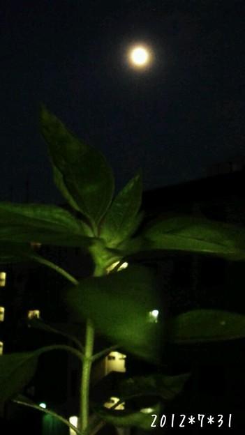 2012*7*31嵐學ひまわり♪ お月様と一緒!