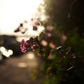 写真: 秋めく夕暮れ