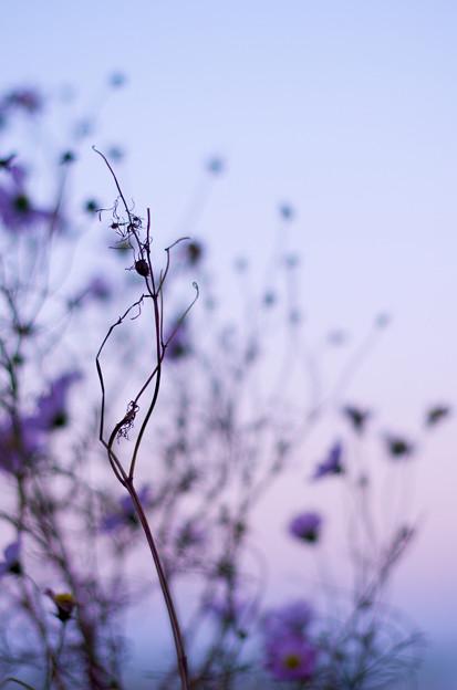 紫だちたる冬の夕暮れ