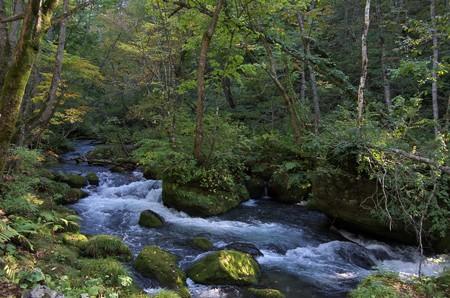 奥入瀬渓流の紅葉はまだまだでした