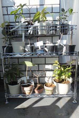 植物用の棚を設置