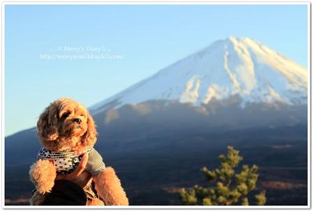 富士とわんこ