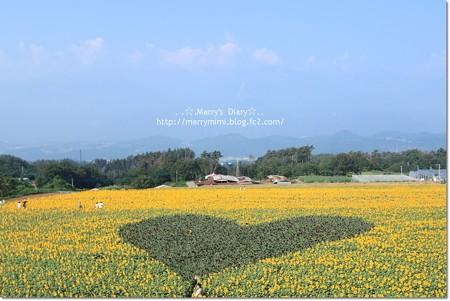 ハート型の向日葵畑