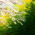 写真: 666 諏訪の竹林