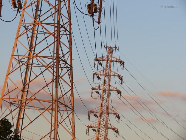 鉄塔とムクドリ、夕焼雲