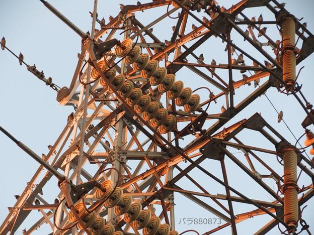 真下から見上げる鉄塔にムクドリ