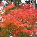 24.11.10鹽竈神社の紅葉