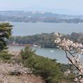 Photos: 25.4.25西行戻しの松公園の桜