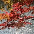 25.11.5サイカチ沼の紅葉