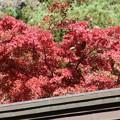 Photos: 25.11.9鹽竈神社の紅葉