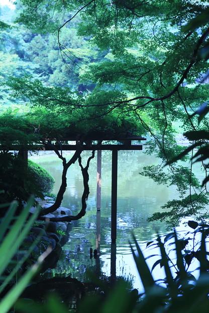 写真: 新宿御苑 1