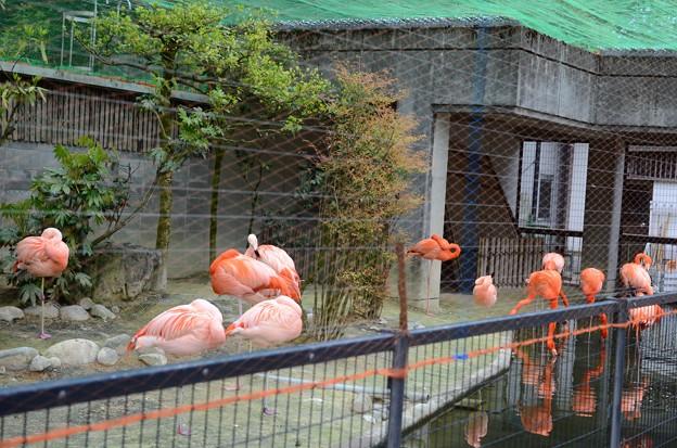 古城公園動物園2