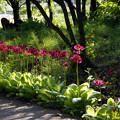 Photos: 花の咲く寺
