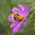 Photos: 熱心な蜂さんね~~