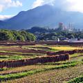 武甲山のふところで