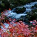 Photos: 渓流の花のように