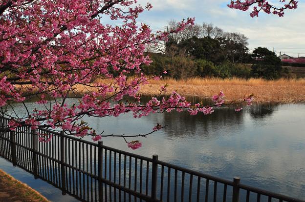 写真: 静かな池に伸びてゆく~~