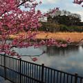 Photos: 静かな池に伸びてゆく~~