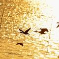 黄昏れの湖面